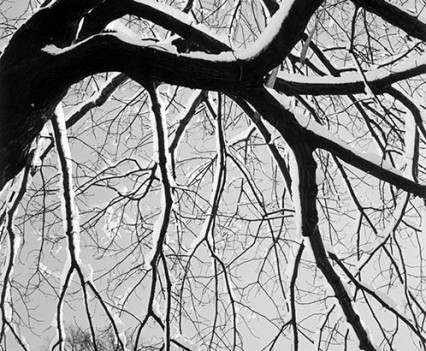 "Untitled,"" Silhouetted Tree in Winter, Central Park, 1961"""