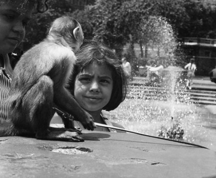 "Untitled, "" Monkey , 1962"""