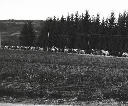 """Horse drawn caravan, 1961"""